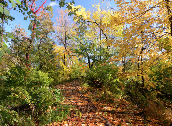 Hallett Nature Sanctuary in the Fall