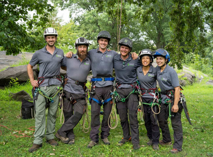 Central Park Conservancy arborists