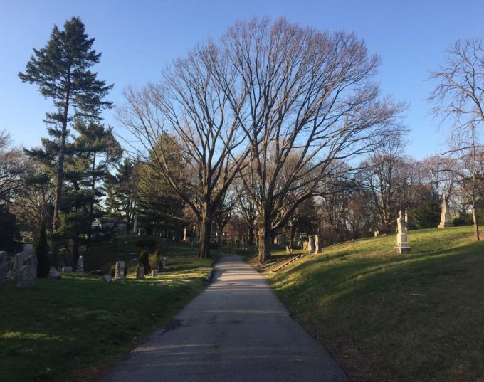 Contemporary photo of young trees in spring at Green-Wood Cemetery