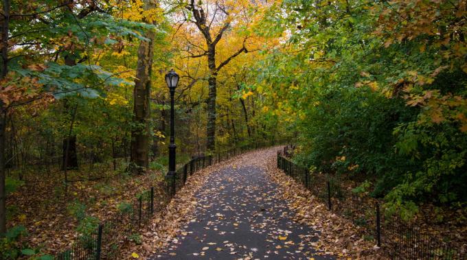 Leaf-strewn view of Iphogene's Walk in autumn