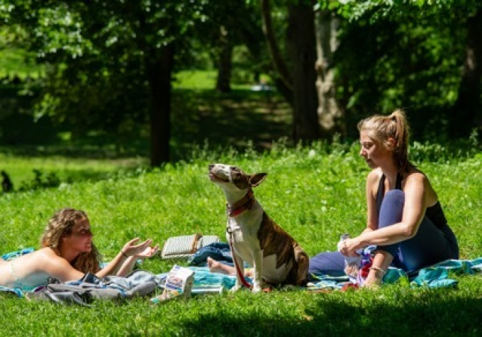 A shelter dog enjoys Central Park