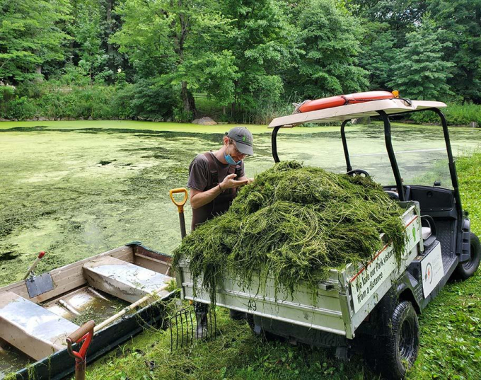 Elodea, an aquatic plant, piled in the back of a Conservancy vehicle, being inspected.