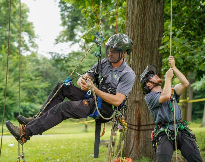 Arborists preparing to climb a tree in Central Park