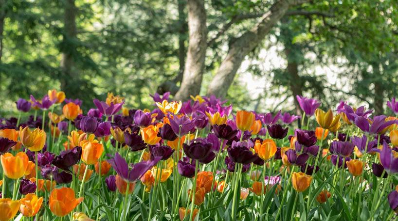 Flowers in Shakespeare Garden