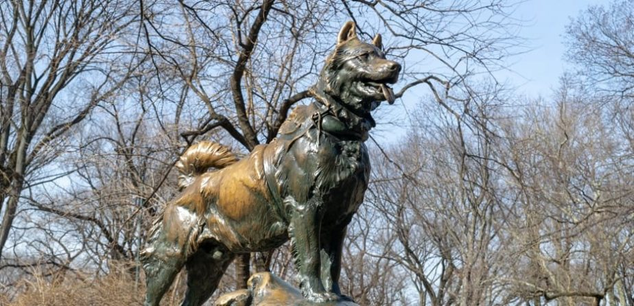 The Past, Present, and Future of Balto