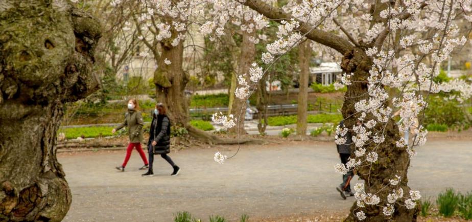 Surgical masks on a springtime stroll