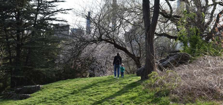 A toddler and parent enjoy spring in the Park
