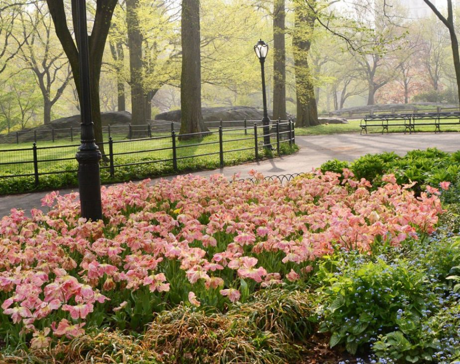 Olmsted Flower Bed