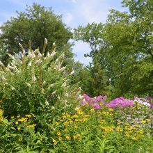 North Meadow Butterfly Gardens