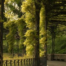 Wisteria Pergola Conservatory Garden