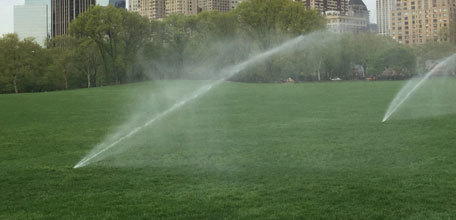 Turf Care in Central Park: Applying the Conservancy's Six Principles of Turf Care