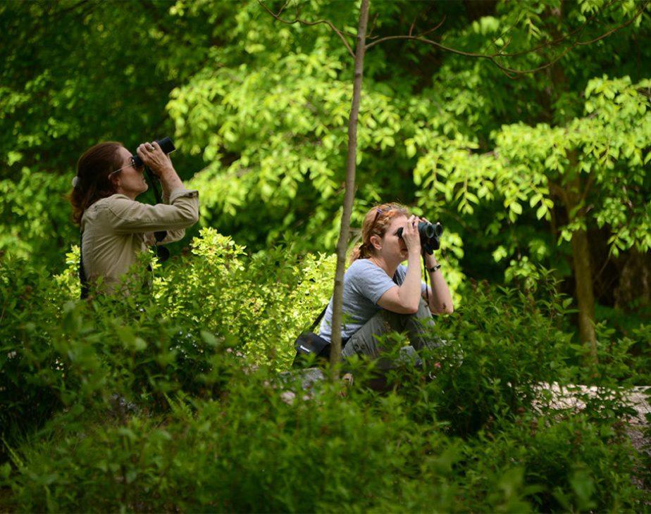 Birding Basics Ramble