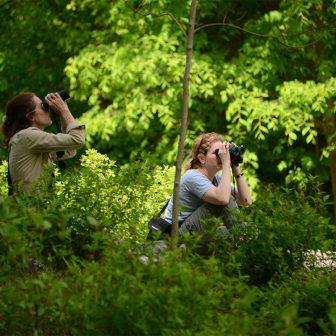 Birders birding the Ramble