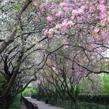 Conservatory Garden blooming in spring