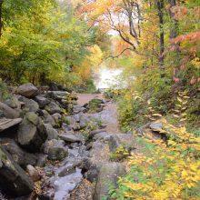 Fall Foliage Ramble Tour