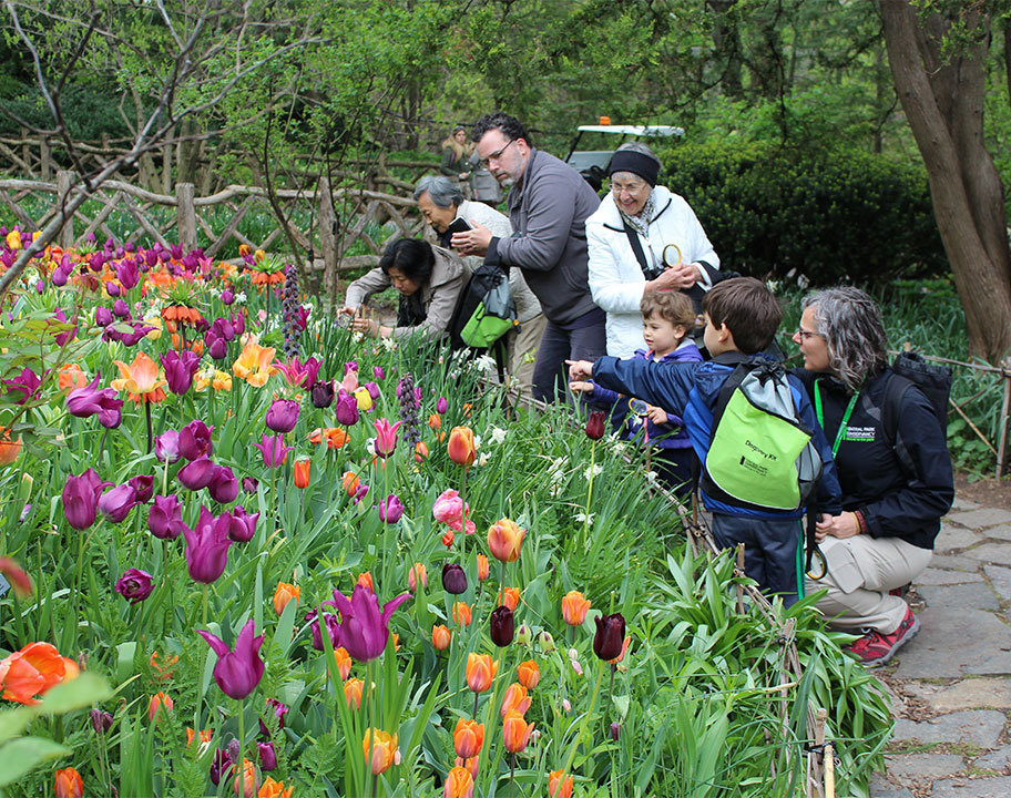 Discovery Walk Shakespeare Garden