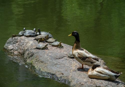 Discovery Walk Turtle Pond