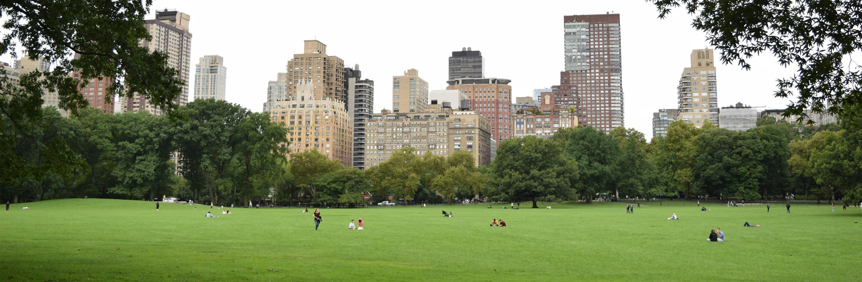 Sheep Meadow Landscape with Skyline