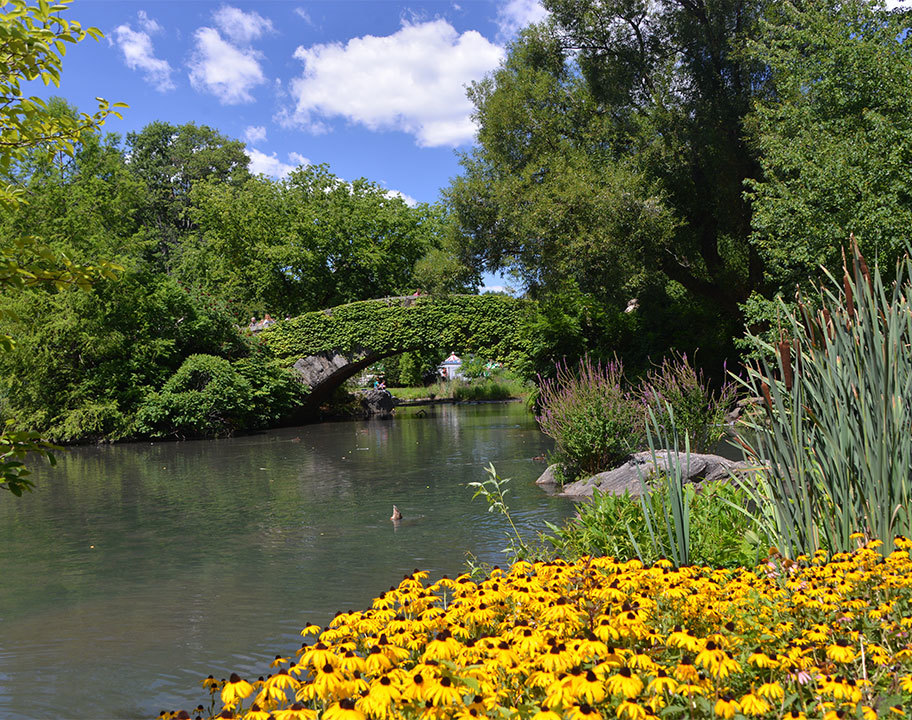 Southern Welcome Pond Summer