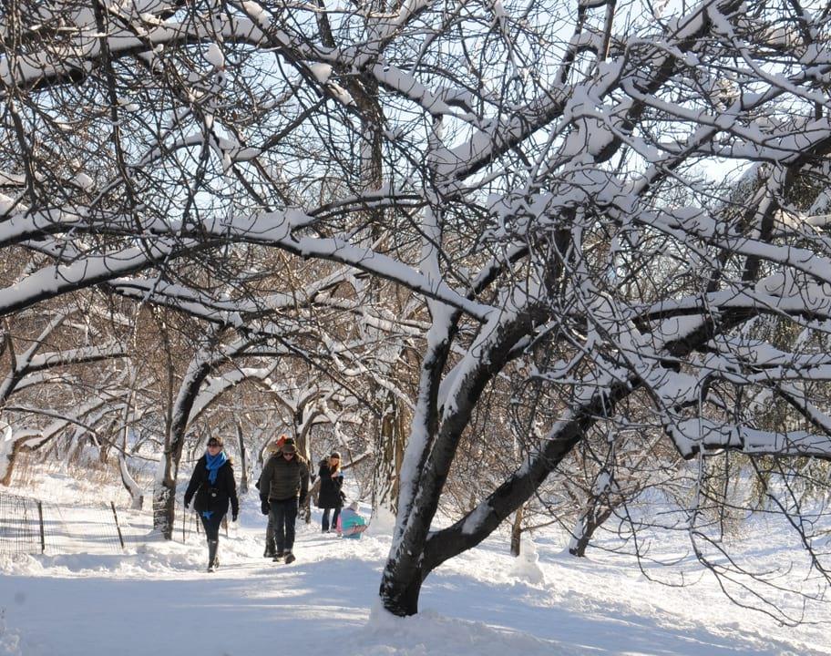 Great Lawn trees in winter