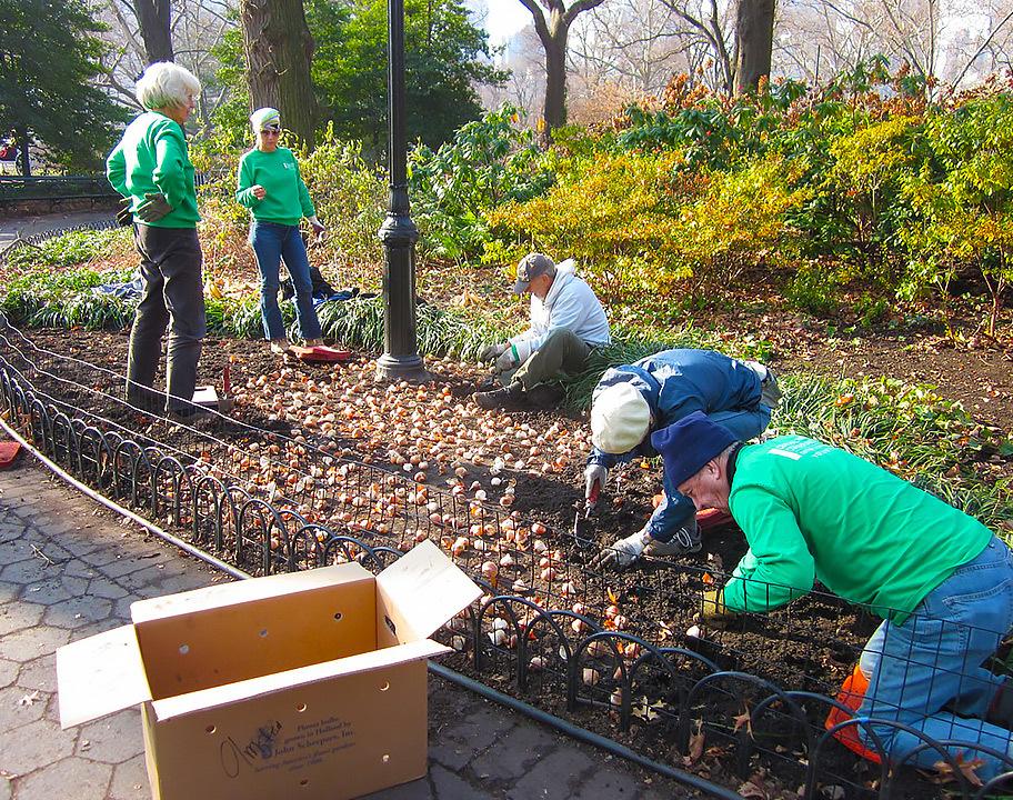 Gardeners Assistants